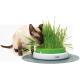 Купить Трава для кошек в Минске