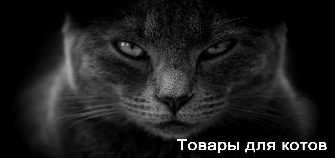 Для котов